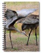 Sandhill Stretch Spiral Notebook