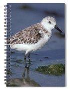 Sandpiper Calidris Mauri Spiral Notebook