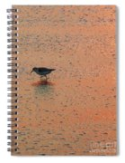 Sandpiper On Shoreline Spiral Notebook