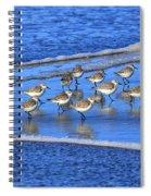 Sandpiper Symmetry Spiral Notebook