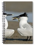 Sandwich Tern Offering Fish Spiral Notebook