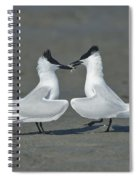 Sandwich Terns Spiral Notebook