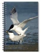 Sandwich Terns Mating Spiral Notebook