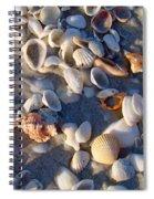 Sanibel Island Shells 1 Spiral Notebook