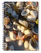 Sanibel Island Shells 4 Spiral Notebook