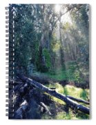 Santa Barbara Eucalyptus Forest II Spiral Notebook