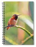 Santa Barbara Zoo Hummingbird Spiral Notebook