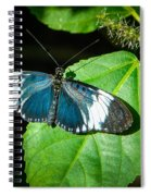 Sapho Longwing Butterfly Spiral Notebook