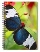 Sapho Longwing  Spiral Notebook
