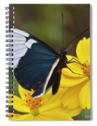 Sapho Longwing Yellow Oriented Spiral Notebook