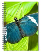 Sara Butterfly Spiral Notebook