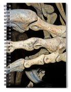 Saurophaganax Dinosaur Claw Fossil Spiral Notebook