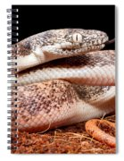 Savu Python In Defensive Posture Spiral Notebook
