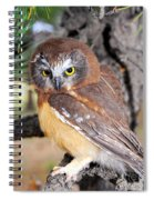Saw-whet Owl In Conifers Spiral Notebook
