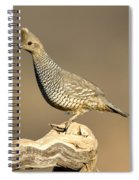 Scaled Quail Callipepla Squamata Spiral Notebook