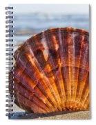 Scallop Shell 2 Spiral Notebook