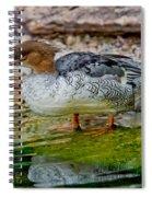 Scaly-sided Merganser Hen Spiral Notebook