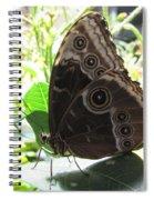 Scarce Morpho Spiral Notebook