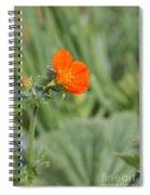 Scarlet Avens Orange Wild Flower Spiral Notebook