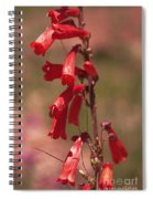 Scarlet Colorado Penstemons Spiral Notebook