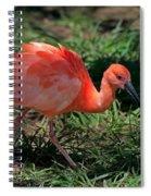 Scarlet Ibis Hybrid Spiral Notebook