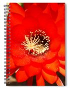 Scarlet Spiral Notebook
