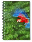 Scarlet Macaw Juvenile In Flight Spiral Notebook