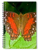 Scarlet Peacock Butterfly Spiral Notebook