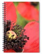 Scarlet Poppy Macro Spiral Notebook