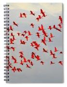 Scarlet Sky Spiral Notebook