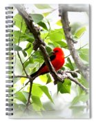 Scarlet Tanager - 19 Spiral Notebook