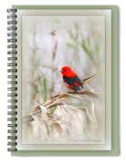 Scarlet Tanager 3630-10-ttp Spiral Notebook