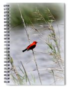Scarlet Tanager - Coastal - Migration Spiral Notebook