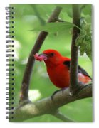 Scarlet Tanager - Fallout Spiral Notebook