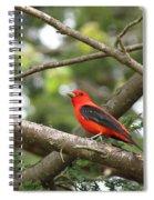 Scarlet Tanager Spiral Notebook