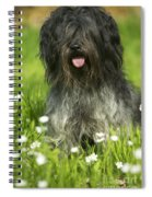 Schapendoes, Or Dutch Sheepdog Spiral Notebook