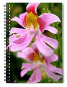 Schizanthus Named Angel Wings Spiral Notebook