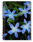 Scilla Flowers In The Morning Spiral Notebook
