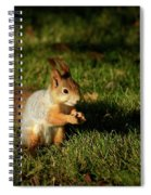 Sciurus Vulgaris In Evening Light Spiral Notebook