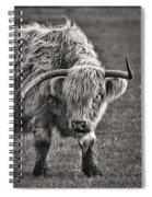Scottish Highland Cow Spiral Notebook