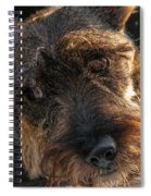 Scottish Terrier Closeup Spiral Notebook