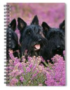 Scottish Terrier Dogs Spiral Notebook