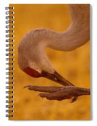 Scratching The Itchy Spot Spiral Notebook
