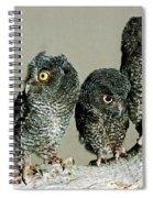 Screech Owl Chicks Spiral Notebook