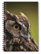 Screech Owl 1 Spiral Notebook