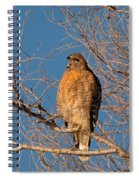 Screeching Red-shouldered Hawk Spiral Notebook