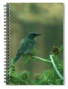 Scrub Jay Spiral Notebook