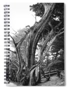 Sculpted Cypress Spiral Notebook