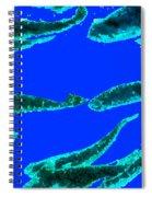 Sea Dreams 1 Blue Spiral Notebook