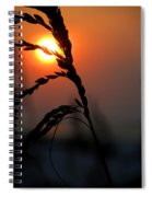 Sea Grass In The Sun Spiral Notebook